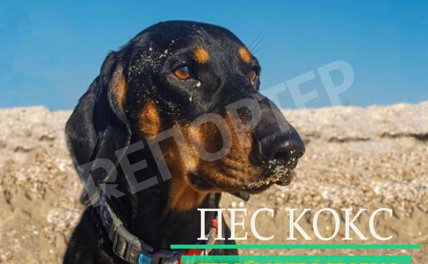 Зверосторис: Днепровский блогер пёс Кокс