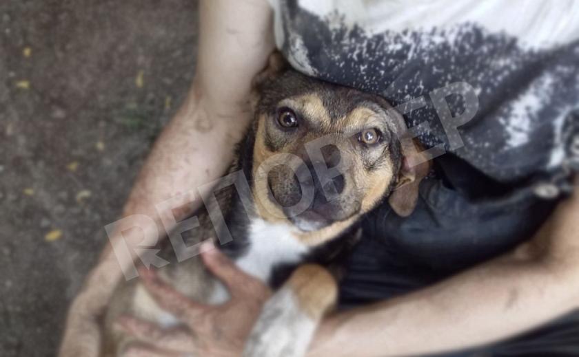 ЗВЕРОсторис: пес Арчи