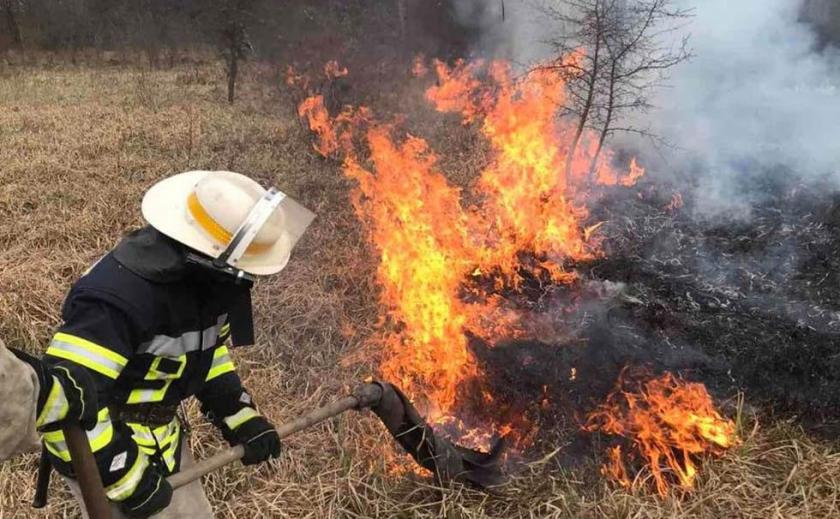 На Днепровщине спасенный из огня мышонок угодил под воду
