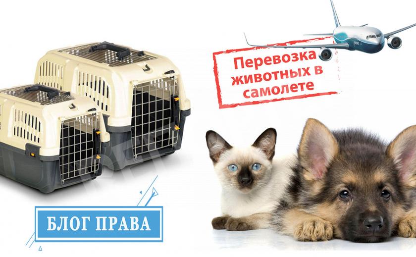 БЛОГ ПРАВА: авиапутешествия с домашними животными