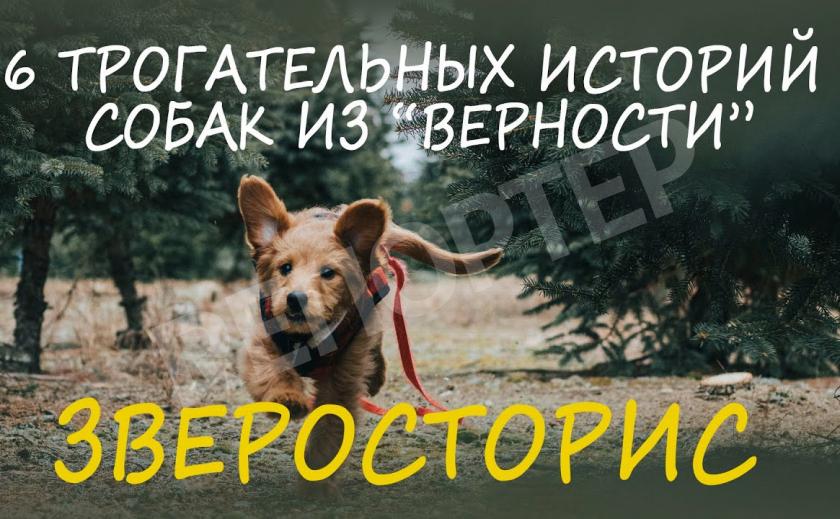 ЗВЕРОСТОРИС: топ-6 историй бездомных собак