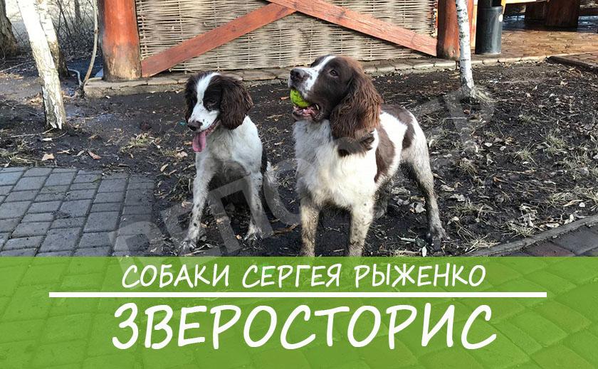 ЗВЕРОСТОРИС: Собаки Сергея Рыженко