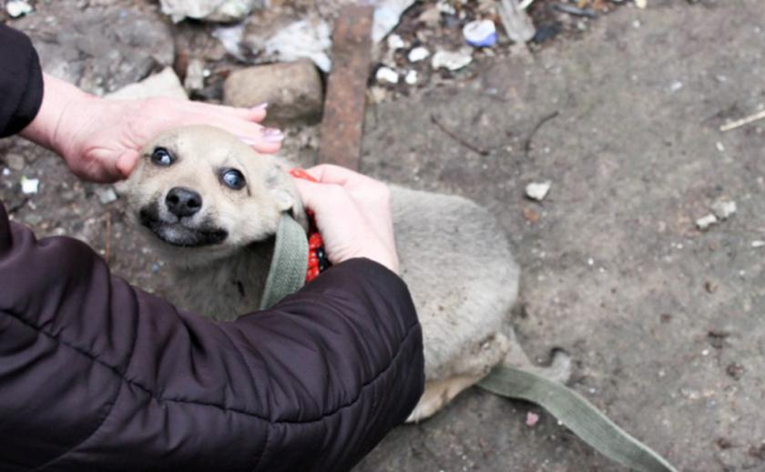 В Вольногорске из развалин спасли щенка ФОТО
