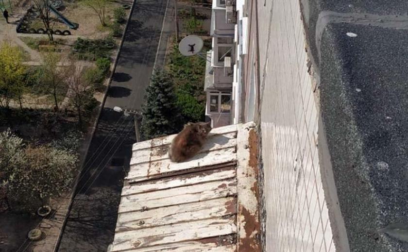 В Днепре бездомный кот чуть не свалился с многоэтажки