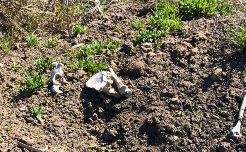 В Днепре возле жилого дома нашли череп и кости