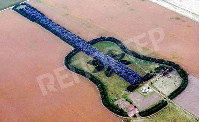 Ради любимой мужчина вырастил гигантский лес в форме гитары