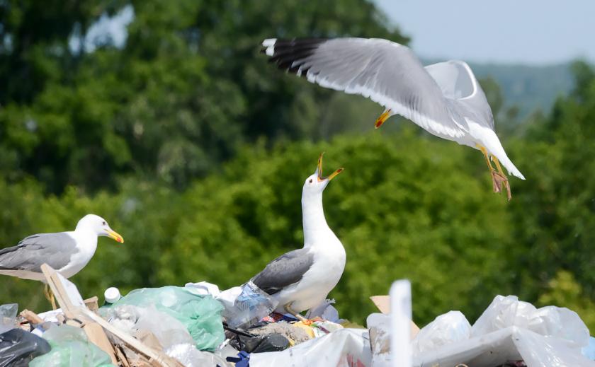 Мусорные войны: в Днепре сборщики мусора напали на коммунальщиков с пистолетом (ВИДЕО)
