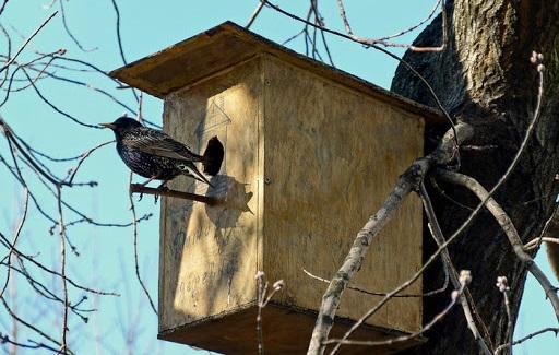 Днепр встречает весенних птичек сковречниками и радиоактивной бочкой ФОТО