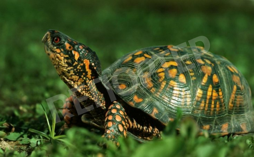 Черепаха – символ устойчивости и надежности