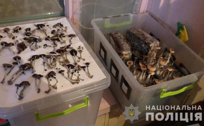 Как на Днепропетровщине борются с галлюцинациями ФОТО ВИДЕО