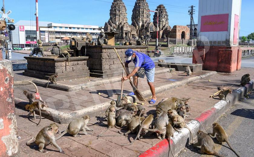 Голодные обезьяны оккупировали город в Таиланде из-за отсутствия туристов