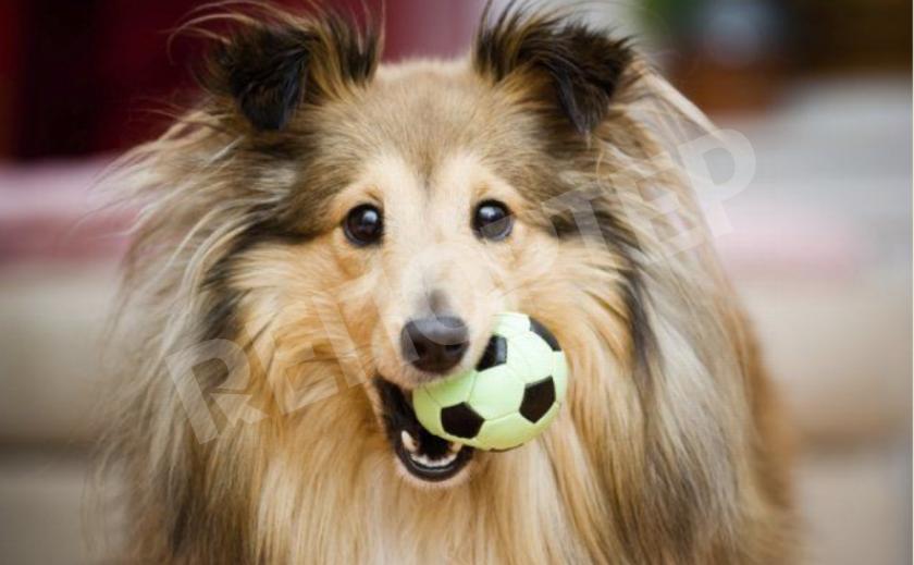 Повод есть! Поздравляем спортивных журналистов, балуем собачек и вспоминаем о Цеппелине