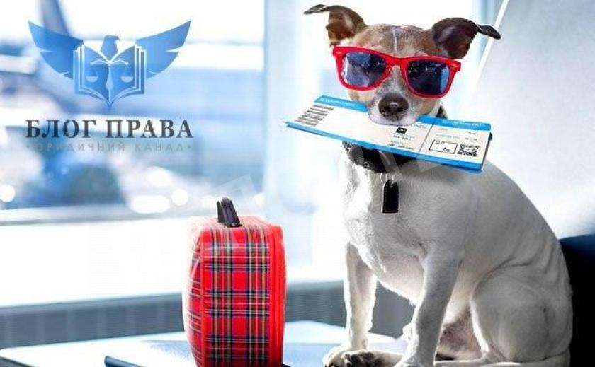 Правила міжнародних перевезень домашніх тварин