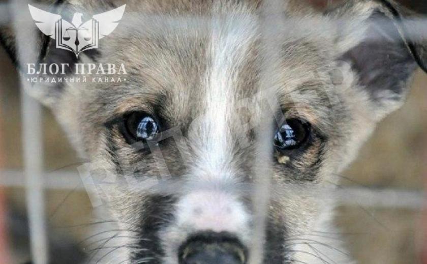 Як зупинити жорстокість проти тварин