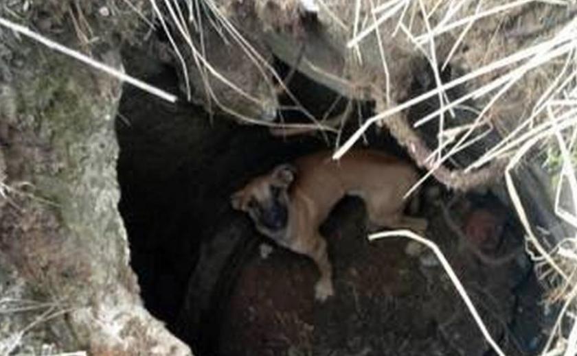 На Днепропетровщине из ямы спасли провалившуюся собачку